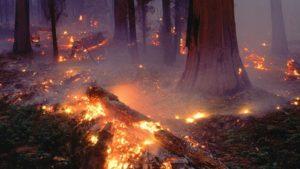 Kerusakan akibat tidak sadar kesehatan lingkungan hidup